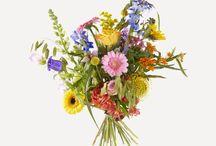 Plukboeketten / De trend op het gebied van bloemen is op dit moment het plukboeket, ook wel veldboeket genoemd. Een plukboeket is nonchalant en ziet eruit of het zo uit een veld met bloemen geplukt is. Bloemen staan worden hoog en laag in het plukboeket verwerkt. Door het mooie contrast is een plukboeket een ware blikvanger in ieder interieur.