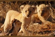 Schotia Safaris / Schotia Safaris Private Game Reserve, Just 35mins from Port Elizabeth.