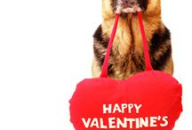Valentines Day With Your Pet