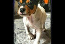 Dalí,mi perro