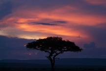 African Sunsets / A great reason to stop whatever you're doing and appreciate the canvas that nature lays before you every evening. The sunsets in Africa are unforgettable!