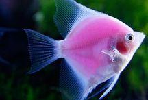 aquarium ♡