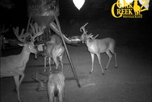 OC 2 Trail Cams 2011 (b)