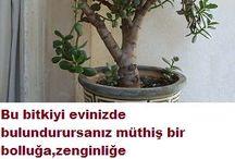 bitkiler ve bahçe