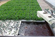 Agricultural Techniques