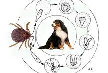 Warto wiedzieć / Zdrowie i pielęgnacja psa. infografiki i ciekawostki.