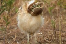 Birds / by Tina Marie Hanson
