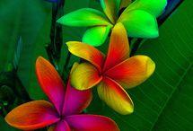 Tanekaha garden love / Creating a garden sanctuary
