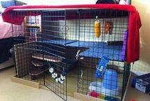 Housing Ideas / Unique indoor housing for companion rabbits.