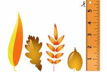 seasonal units