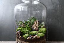 Terrariums plants