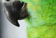 Everlasting love for parrots