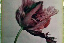 LEENDERT BLOK / Leendert Blok: Leise Schönheiten - Farbfotografien aus den 1920er-Jahren. Blok (1895-1986) experimentierte schon früh mit Farbfotografien und Nahaufnahmen. Für Blumengroßhändlern produzierte er Warenkataloge mit hochwertige Farbdrucken von Blumen. Blok wollte mit seinen Bildern faszinieren: In zartesten Farbschattierungen und Bronzetönen offenbart sich in ihnen das ewige Reich der Flora. Dahlien, Narzissen, Iris, Hyazinthen und Pfingstrosen zeigen sich in ihrer ganzen Pracht und Einzigartigkeit.