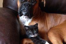 Animals loves / roztomilá přátelství
