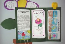 Classroom - Science - Plants / by Emily Hand