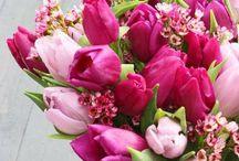 Krásný svátek, tulipáne! / 13. května slavíme jako Den tulipánů. Víte, která země má tulipán jako svůj symbol a odkud vlastně tulipán pochází?