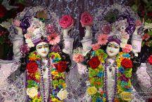 ISKCON Chicago - Gaura Nitai with Acharyas  / Beautifull wallpapers of Gaura Nitai with Acharyas Of ISKCON Chicago maid by ISKCON Desire Tree