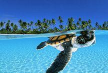 Love Turtles / by Carel Carroll