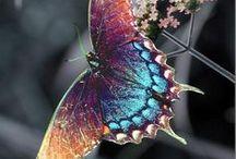 Butterflies and Ladybug