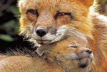 Dieren ouders en jongen