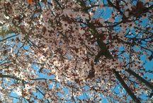 Profumi di fiori / profumi di fiori