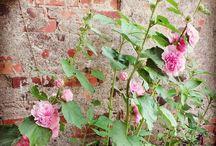w moim ogrodzie - in my garden