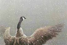 Feathered Friends / Hyper/Photorealistic Paintings / Illustrative / Digital / traditional of our avian friends  / by ifourdezign
