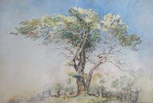 Copaci si paduri / despre peisaje in care sunt paduri, copaci, pomi