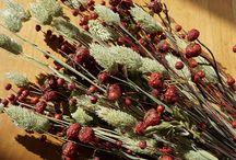 Phalaris / Phalaris, a decorative dried grass.