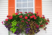 Container gardens / by Judy Henriques-Evans