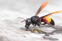 Orkin's Top 6 / Lists of Top 6 pest related bests, worsts, mosts and leasts. / by Orkin Pest Control