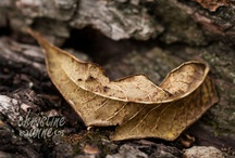 Autumn Cool and Crisp / Autumn--my favorite season.  This is where I pin my favorite things about autumn. / by Christine Anne