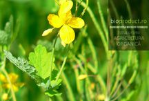 Beneficiile plantelor medicinale - Ceaiuri