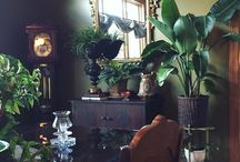 rastliny v byte