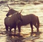 Unicorns / Horses