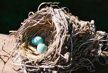 Leaving Traces: Diving From the Nest