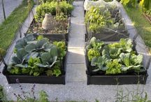 New kitchen garden