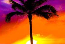 Sunrise, Sunset / by Micki Kowalik