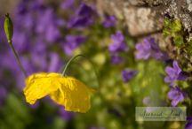 Blog - Seonaid Teal Photography / Blog Posts by Seonaid Teal Photography