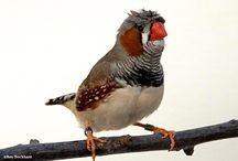 Bird_