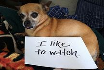 Dog shaming / by Amanda Wagner