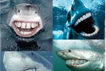 Shark Week !