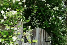 pnącza do ogrodowej jadalni