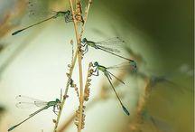 бабочки' стрекозы
