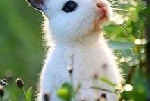 Amantes de conejos, rabbit lovers