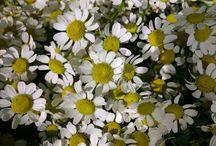Fleurs d'été / À chaque saison sa fleur, voici les fleurs inspirante de l'été