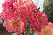 Flowers and plants / Bouquets etc