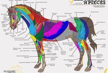 osteopati hest og hund