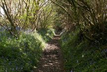 Places To Find Bluebells In Cornwall