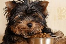 Healthy Dog Food / Here are some great food options for your dog